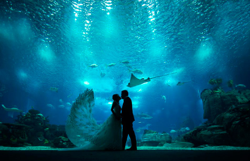 photo daniel Ribeiro aquarium lisbonne mariés chine mariage
